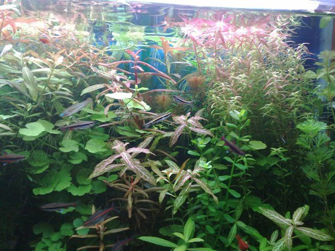125 gallons planted tank (mostly live plants and fish) - .