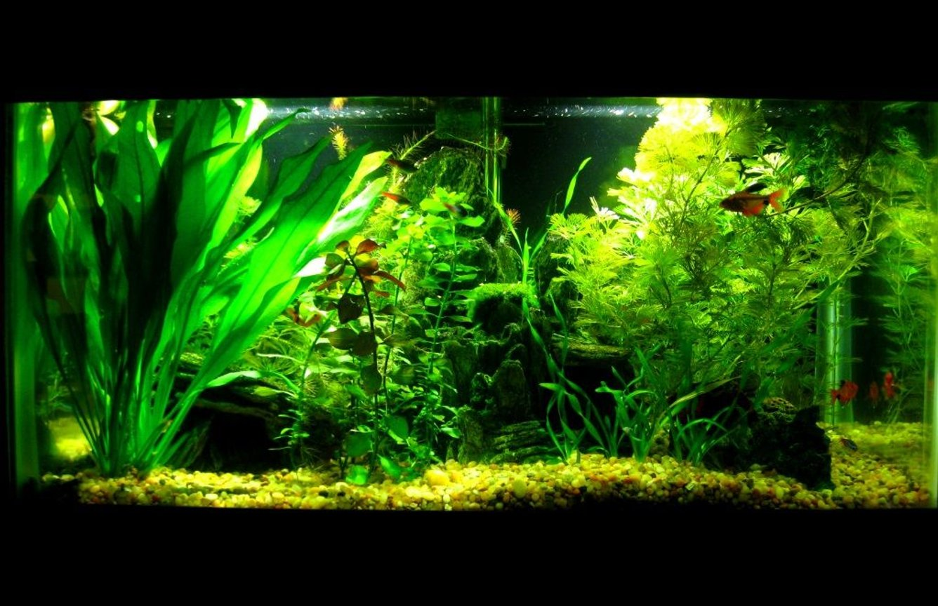 15 gallons planted tank (mostly live plants and fish) - My 15 G planted tank, no CO2