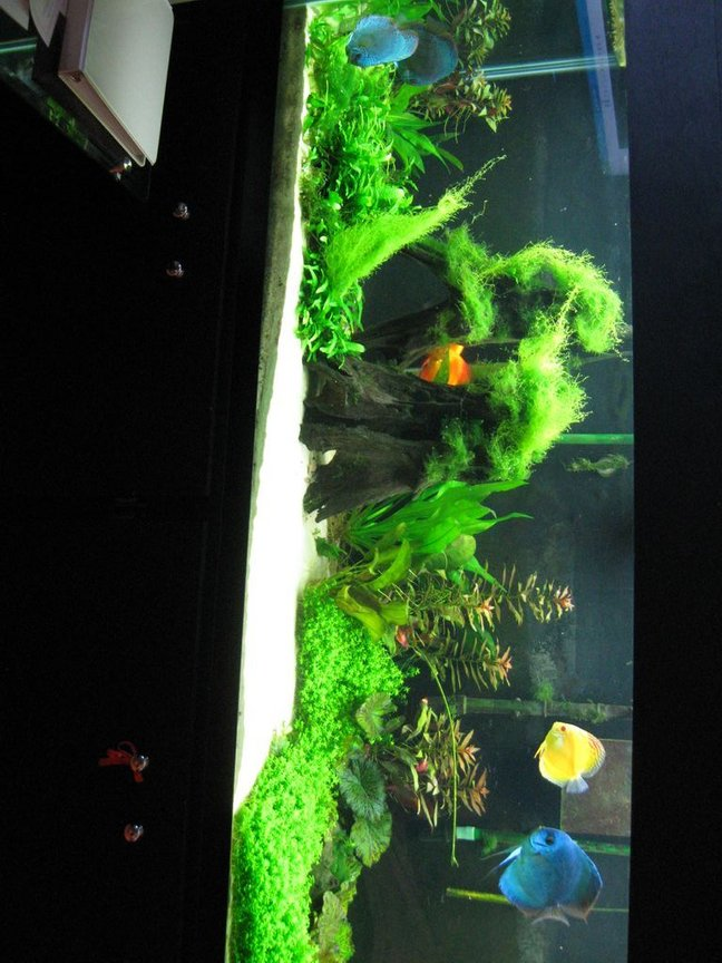 150 gallons planted tank (mostly live plants and fish) - This setup is 4 months old...