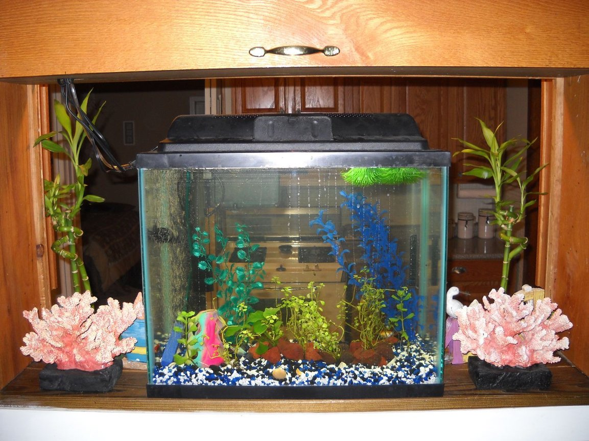 55 gallons planted tank (mostly live plants and fish) - 14g platy tank planted