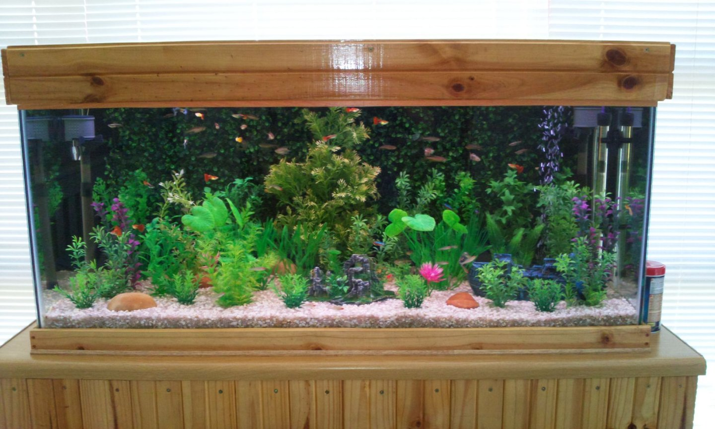 65 gallons planted tank (mostly live plants and fish) - The front view of my tank.