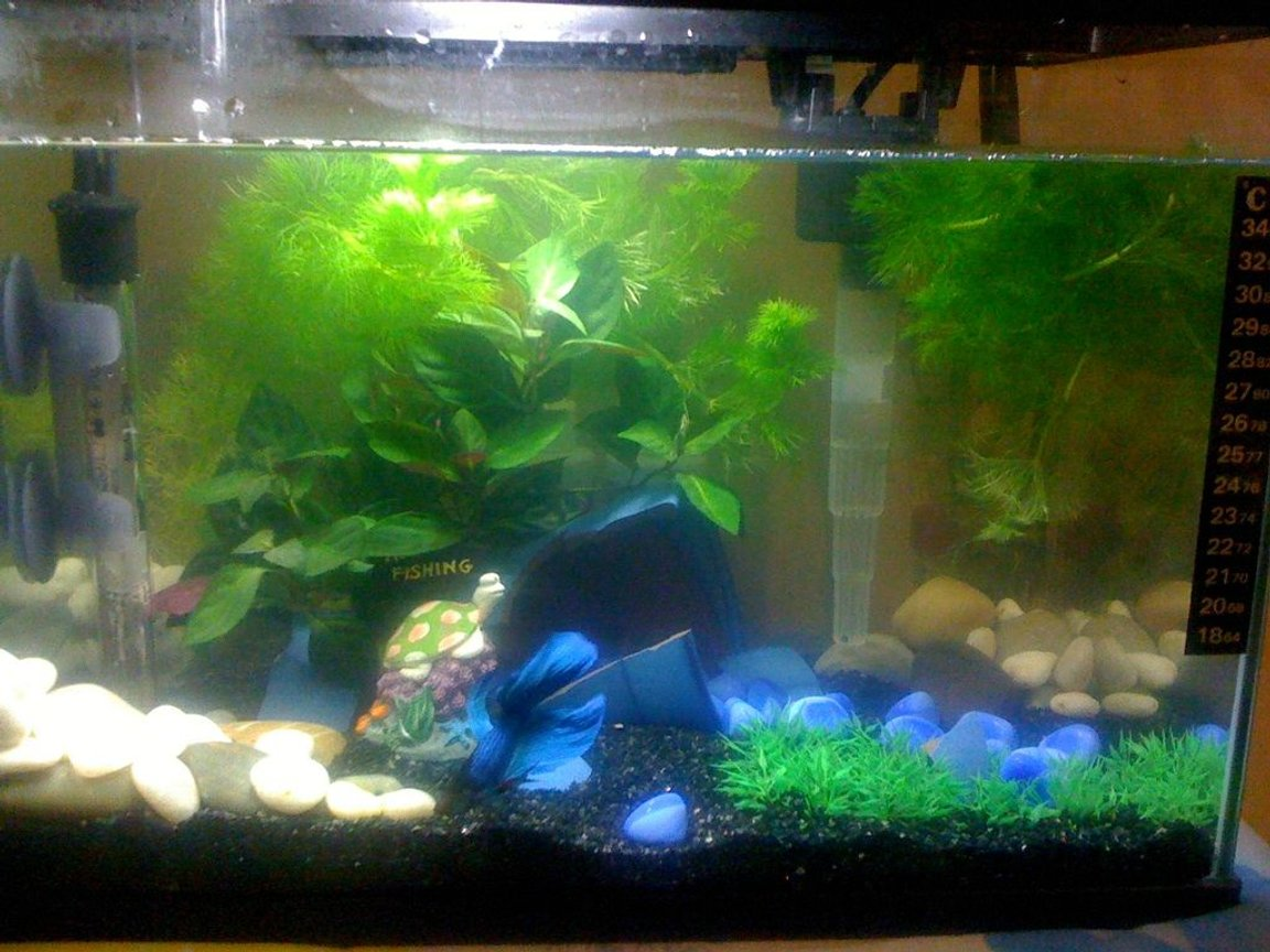 5 gallons planted tank (mostly live plants and fish) - my tank
