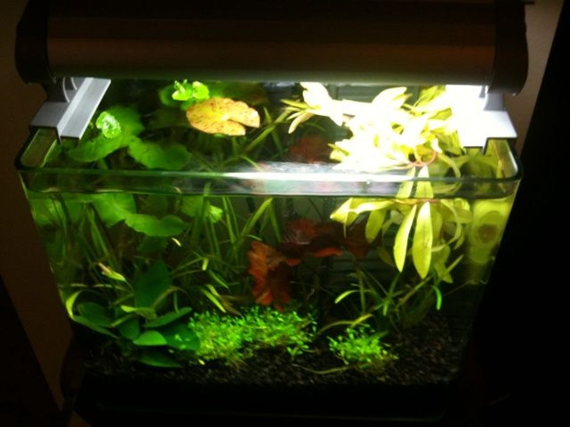 3 gallons planted tank (mostly live plants and fish) - Top view