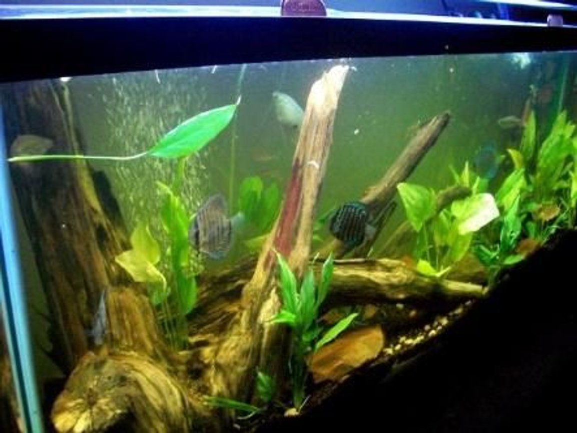 55 gallons planted tank (mostly live plants and fish) - new arrangment of my 55 gallon