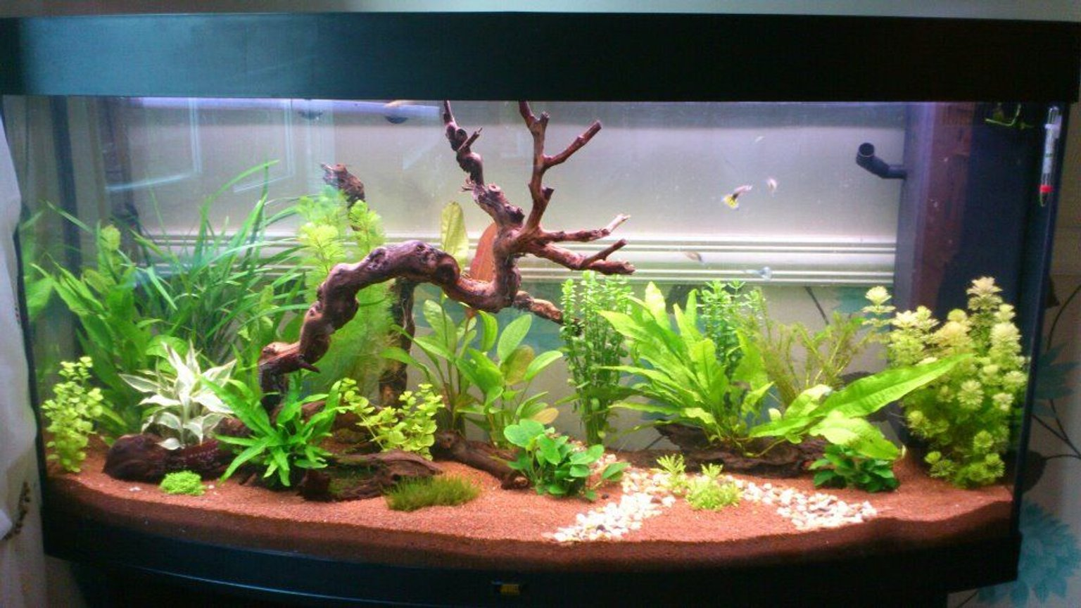 57 gallons planted tank (mostly live plants and fish) - 4ft 260lt planted tank mainly for dwaft shrimp keeping