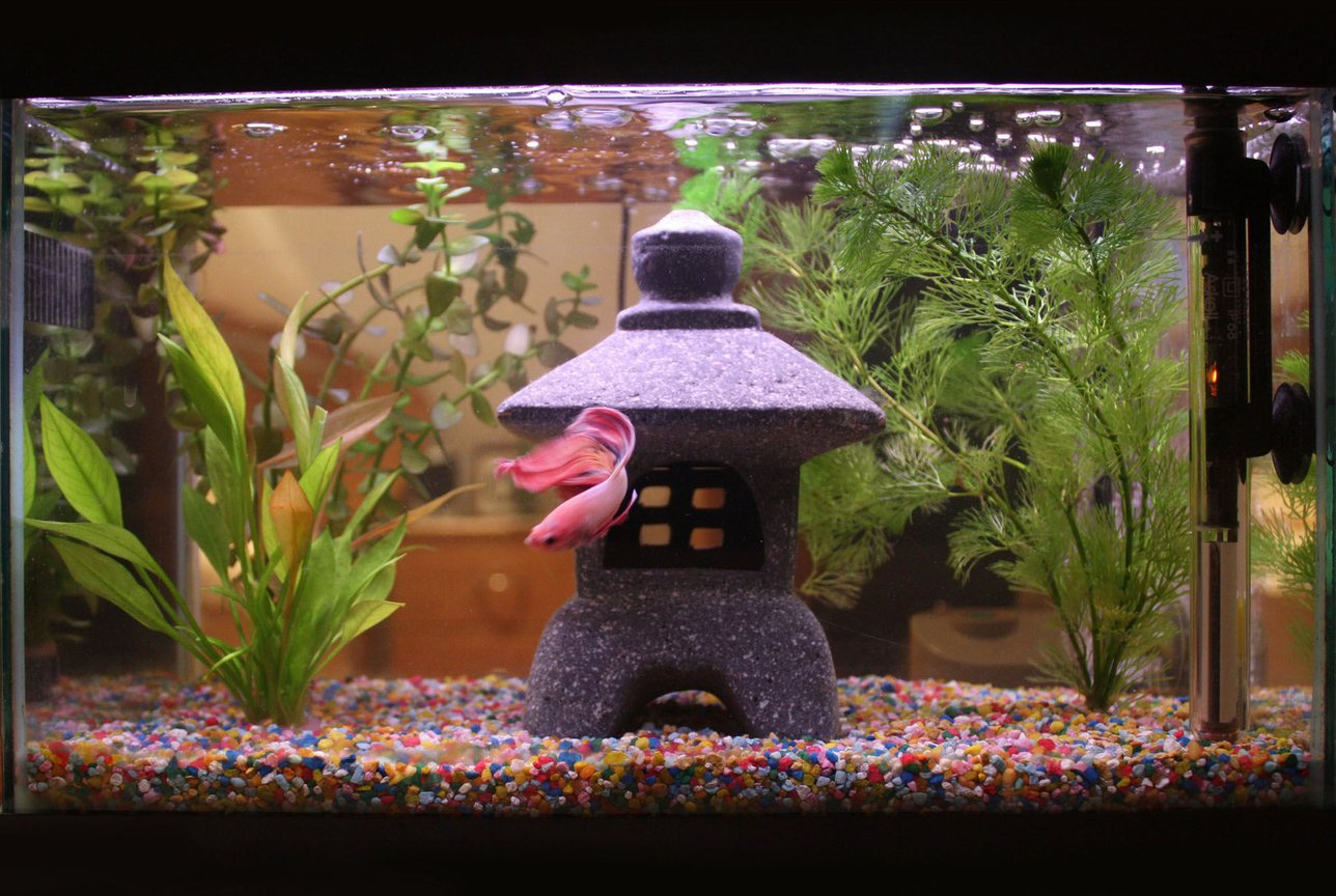 4 gallons planted tank (mostly live plants and fish) - ♥