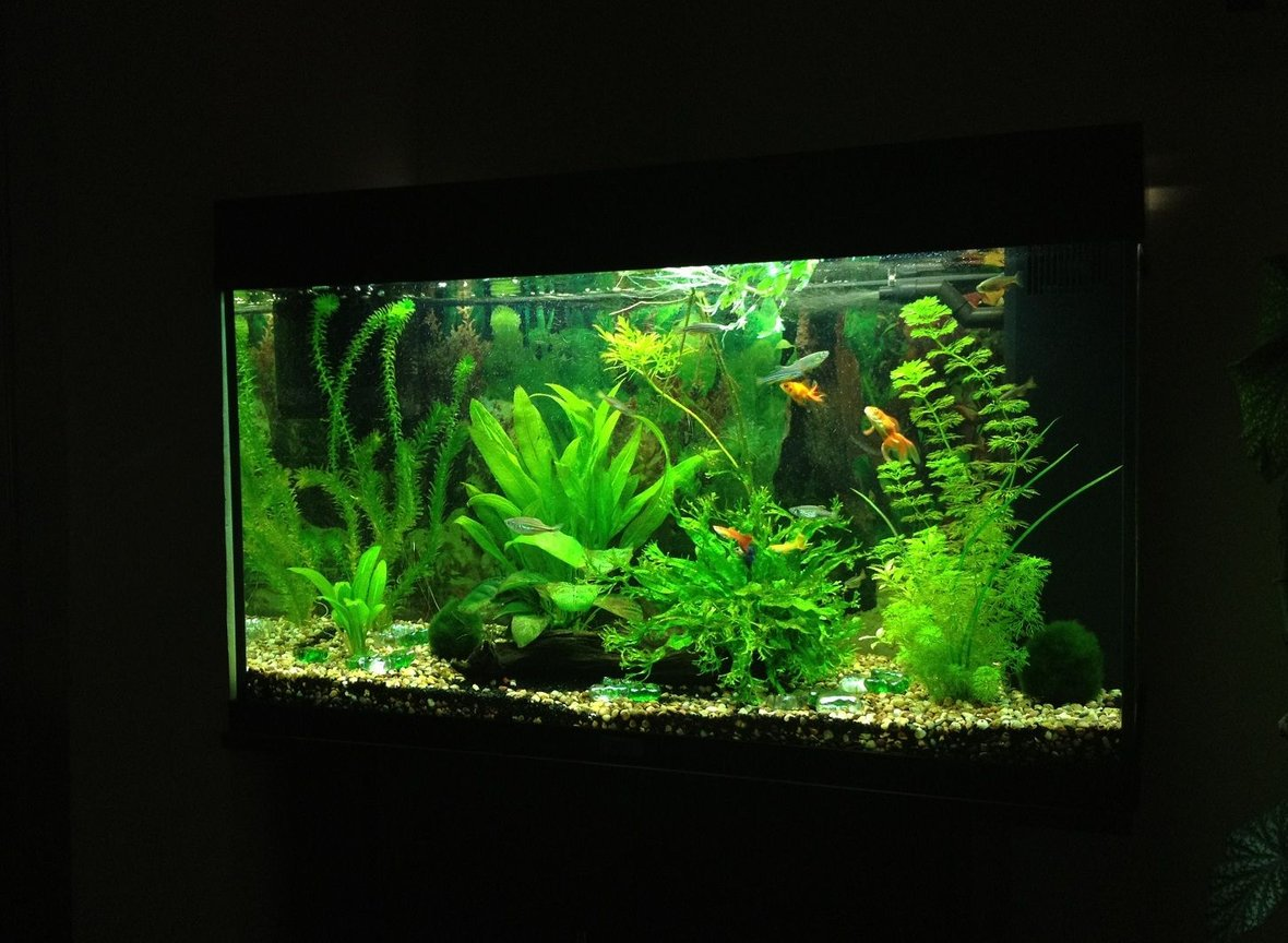 40 gallons planted tank (mostly live plants and fish) - Update as of 26.02.12