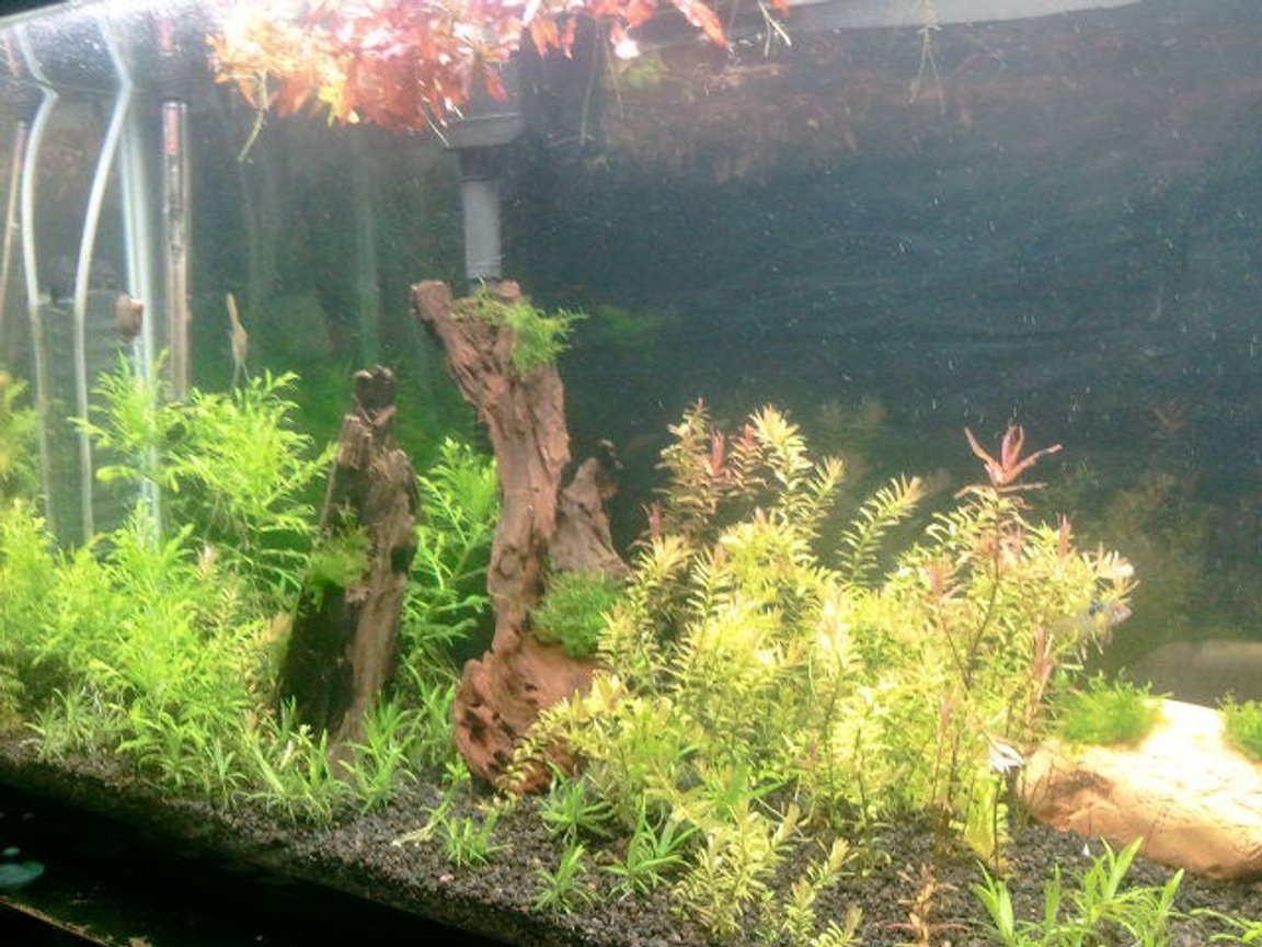 29 gallons planted tank (mostly live plants and fish) - my first planted tank 29 gallons