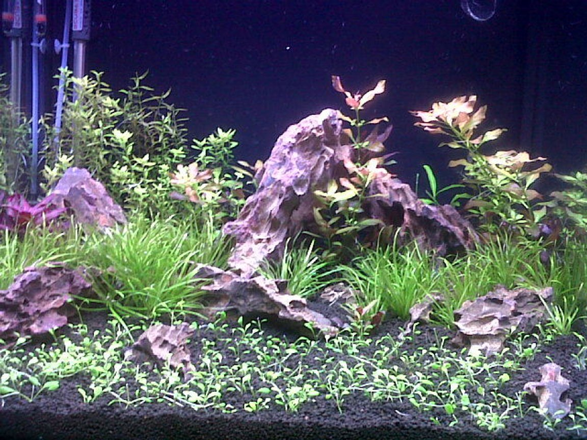 45 gallons planted tank (mostly live plants and fish)