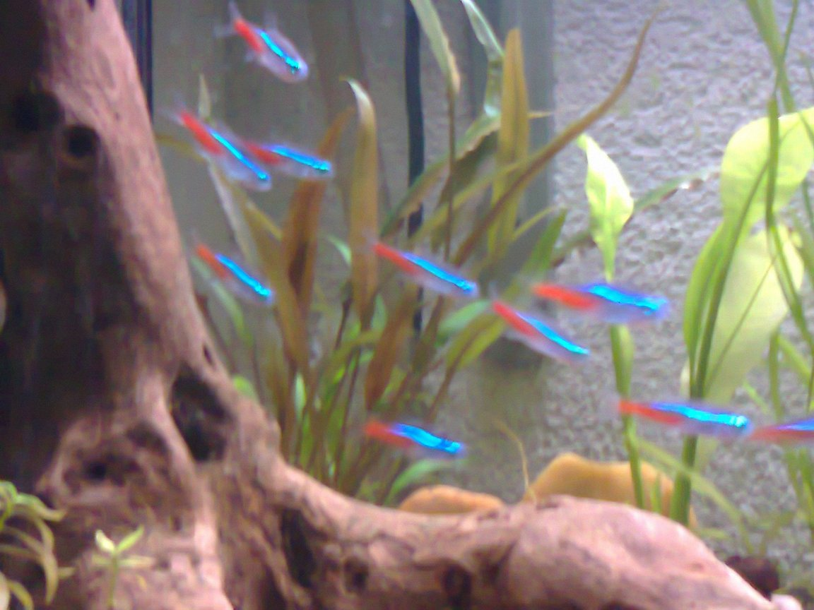 26 gallons planted tank (mostly live plants and fish) - ....................