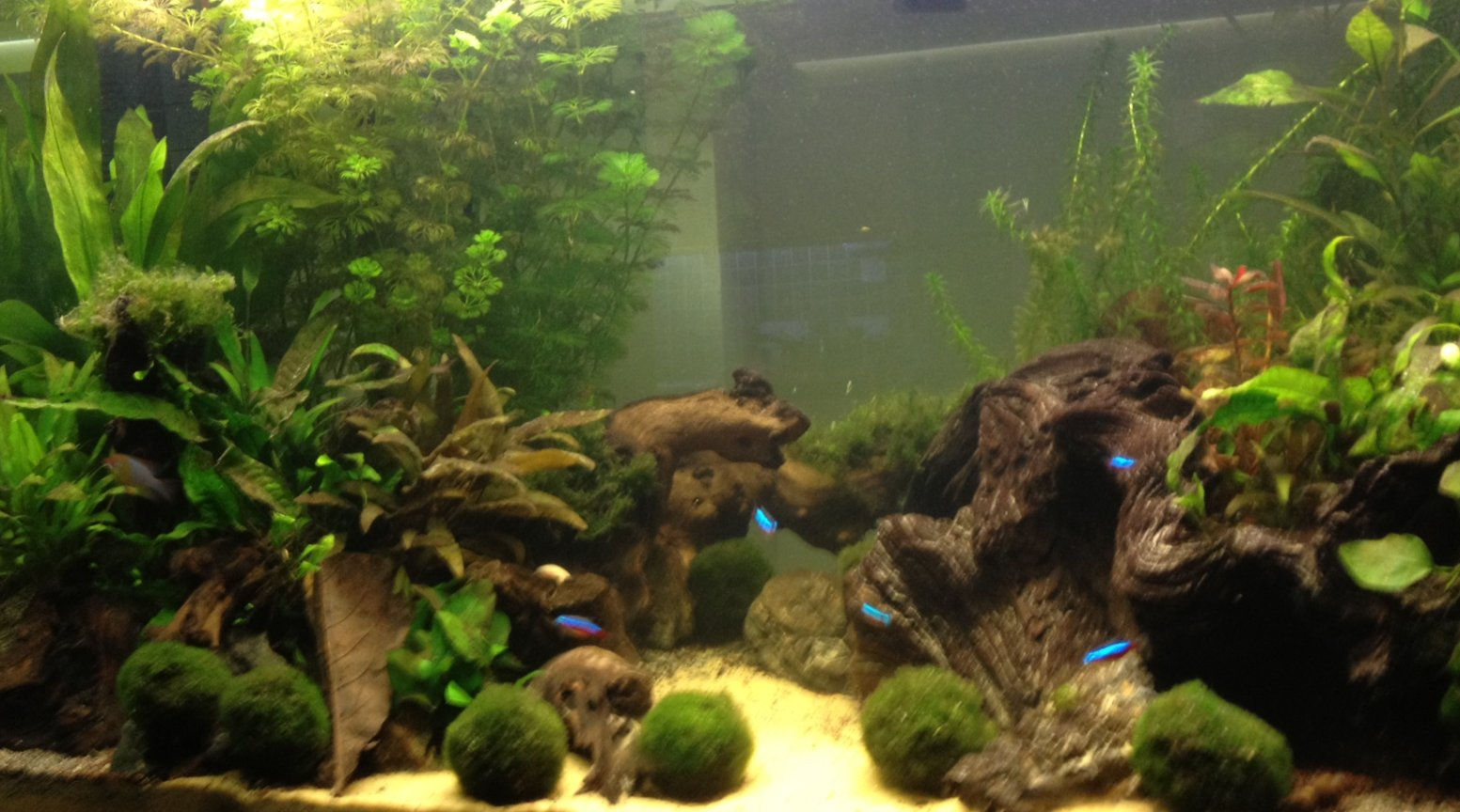 40 gallons planted tank (mostly live plants and fish) - First planted tank 5 months old