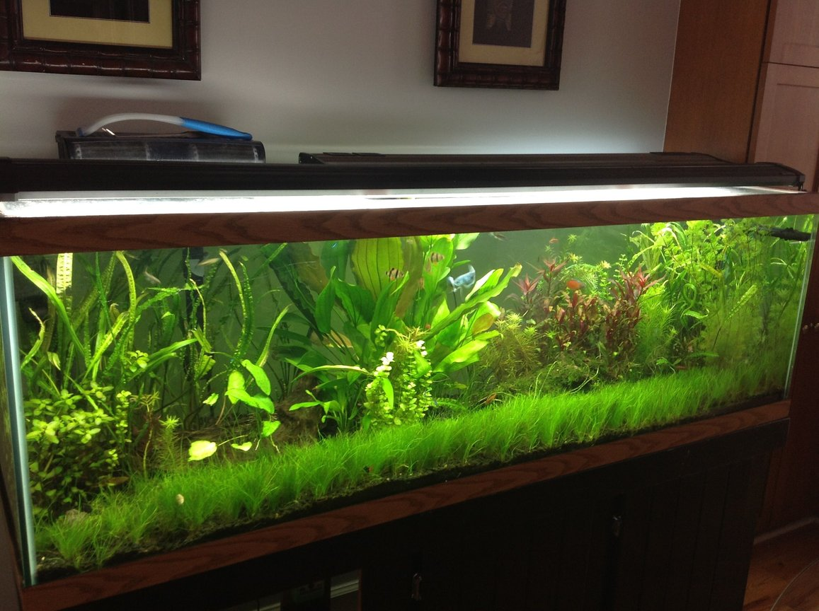 125 gallons planted tank (mostly live plants and fish) - 125g Planted