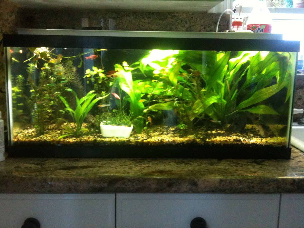 60 gallons planted tank (mostly live plants and fish) - 20 gallon long planted with co2