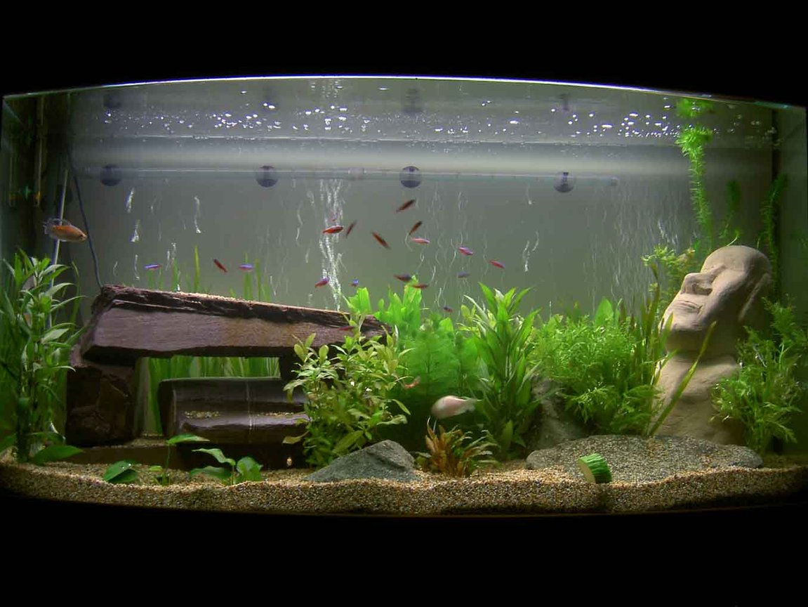 30 gallons planted tank (mostly live plants and fish) - Aqua one 30 Gallon monster