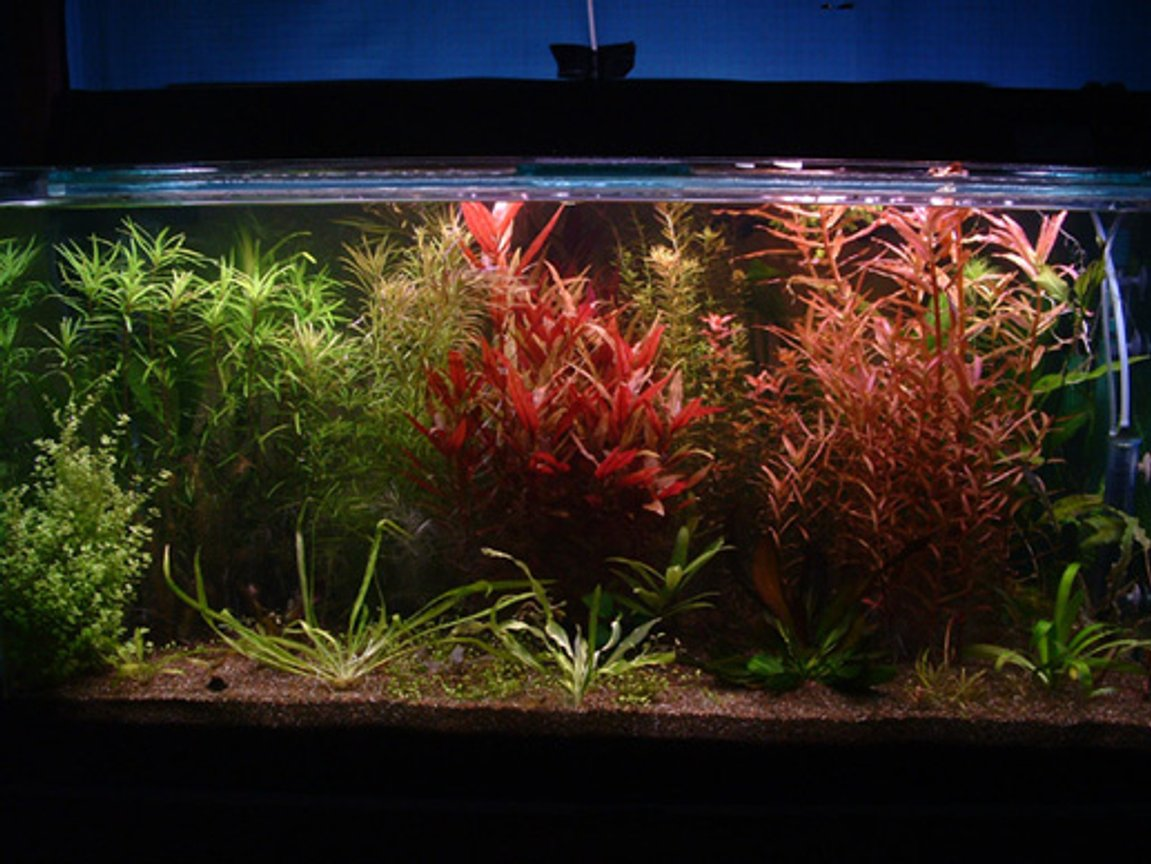100 gallons planted tank (mostly live plants and fish) - 120x60x60 planted tank.The color gave me the most satisfaction as it is sometimes very hard to have all plants doing well.