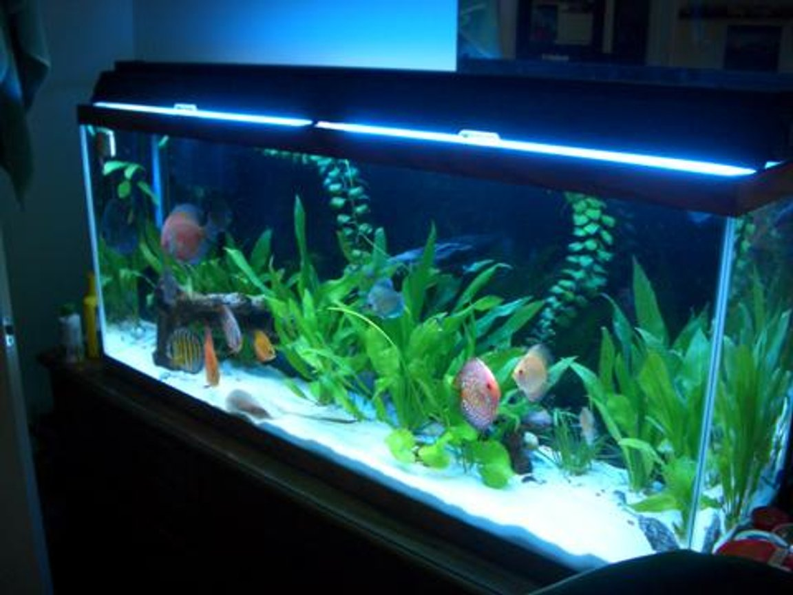 55 gallons planted tank (mostly live plants and fish) - Discus / Stingray Tank