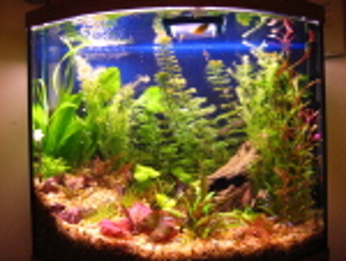 26 gallons planted tank (mostly live plants and fish) - Angels, Gouramis, Danios, Black skirt tetras, red eye tetras, cardinal tetras, red fin tetras, Kuhli Loaches, cories, algae eaters, frogs. Red Tiger lotus, Camboba, Foxtail, swords, wendi, banana plant, rotella, the rest is unknown