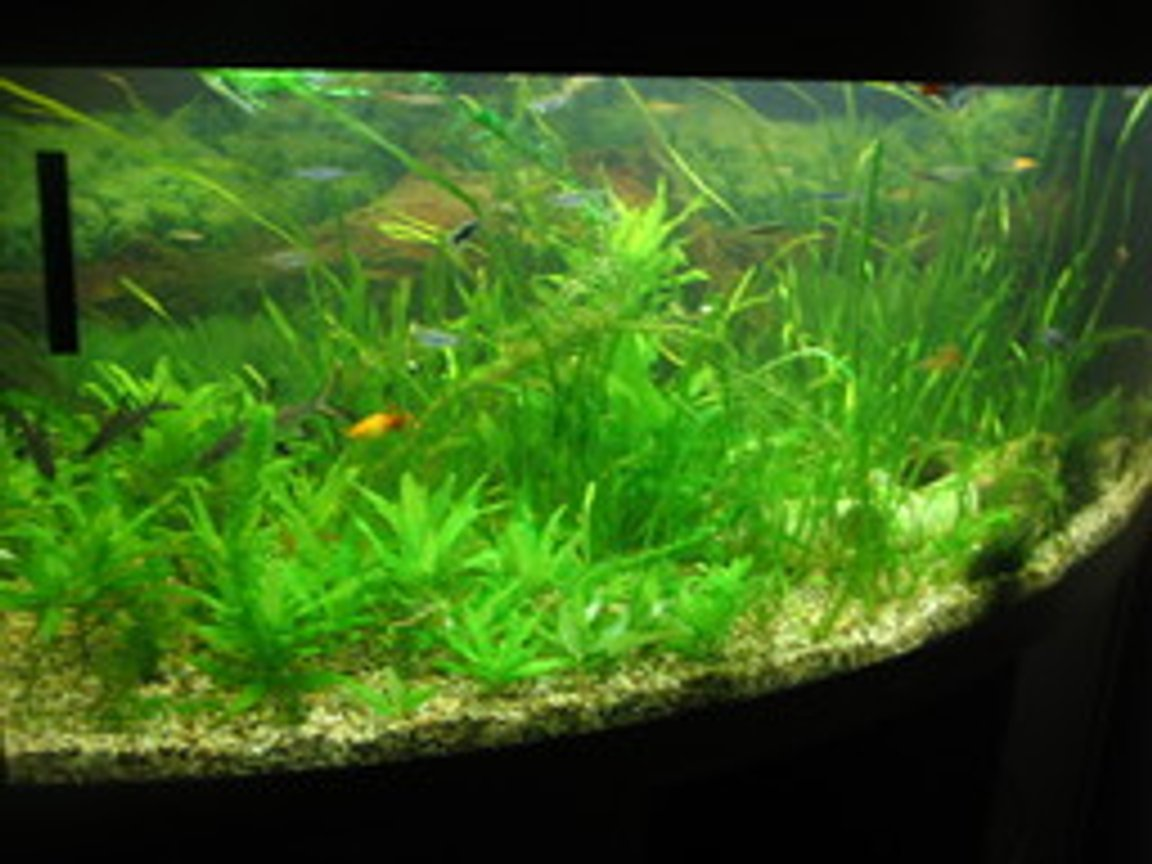 100 gallons planted tank (mostly live plants and fish) - My tropical community tank