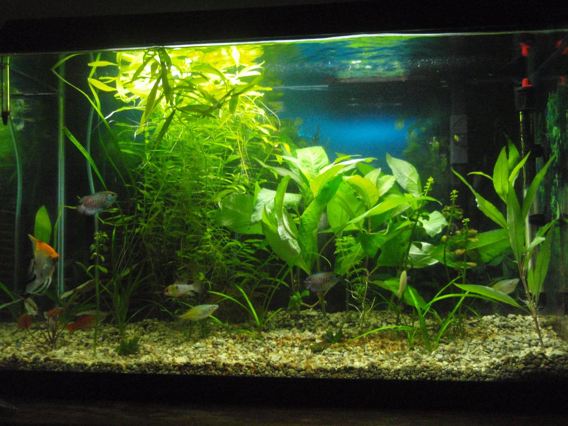 29 gallons planted tank (mostly live plants and fish) - 30g with marineland penguin 200,