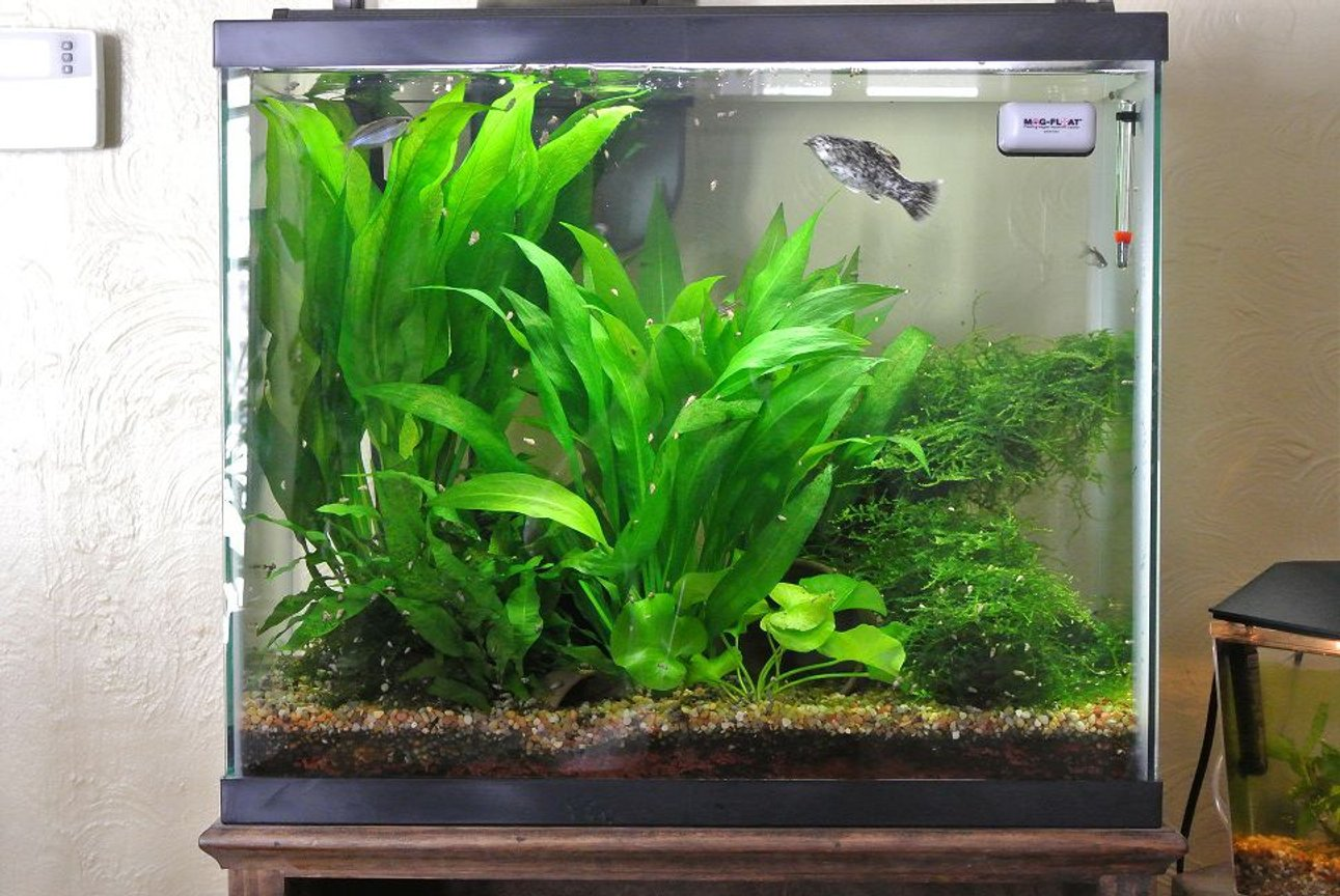 25 gallons planted tank (mostly live plants and fish) - this is my tank