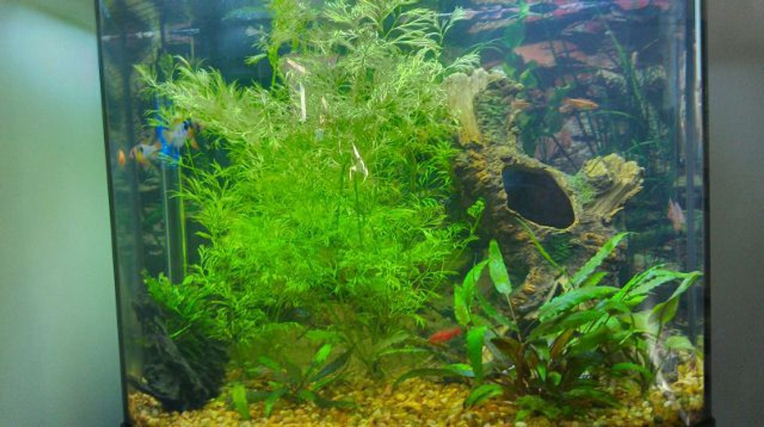 26 gallons planted tank (mostly live plants and fish) - Plants: Jave fern, water sprite and crypts Fish: Millennium rainbow Fish, 3 blue rams, 8 cherry barbs, 1 african butterfly fish, 1 driftwood, 1 fake tree stump 26 gallon bow front