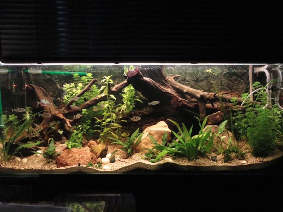 125 gallons planted tank (mostly live plants and fish) - it is a planted tank with anubias nana, echindorus, Bocopa, Anubias minima. just two neons t5 and two t8 for a total of 150 W , the plants are growing very wel .