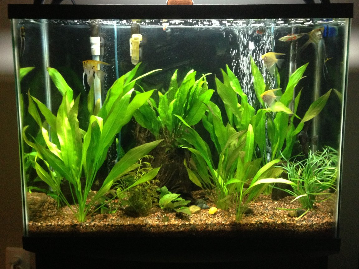 37 gallons planted tank (mostly live plants and fish) - 37 gallon beginner planted tank