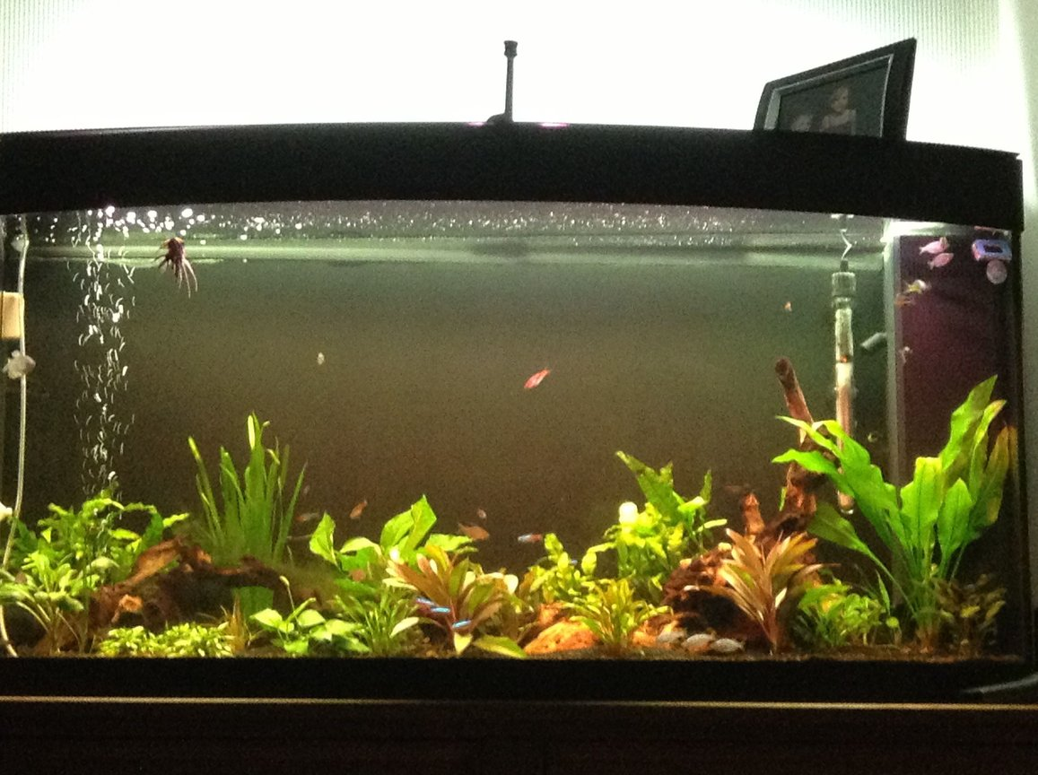57 gallons planted tank (mostly live plants and fish) - 57 gallon all live plants