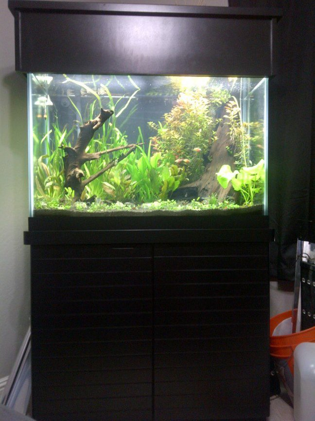 65 gallons planted tank (mostly live plants and fish) - 65gal ada soil power compacts press co2