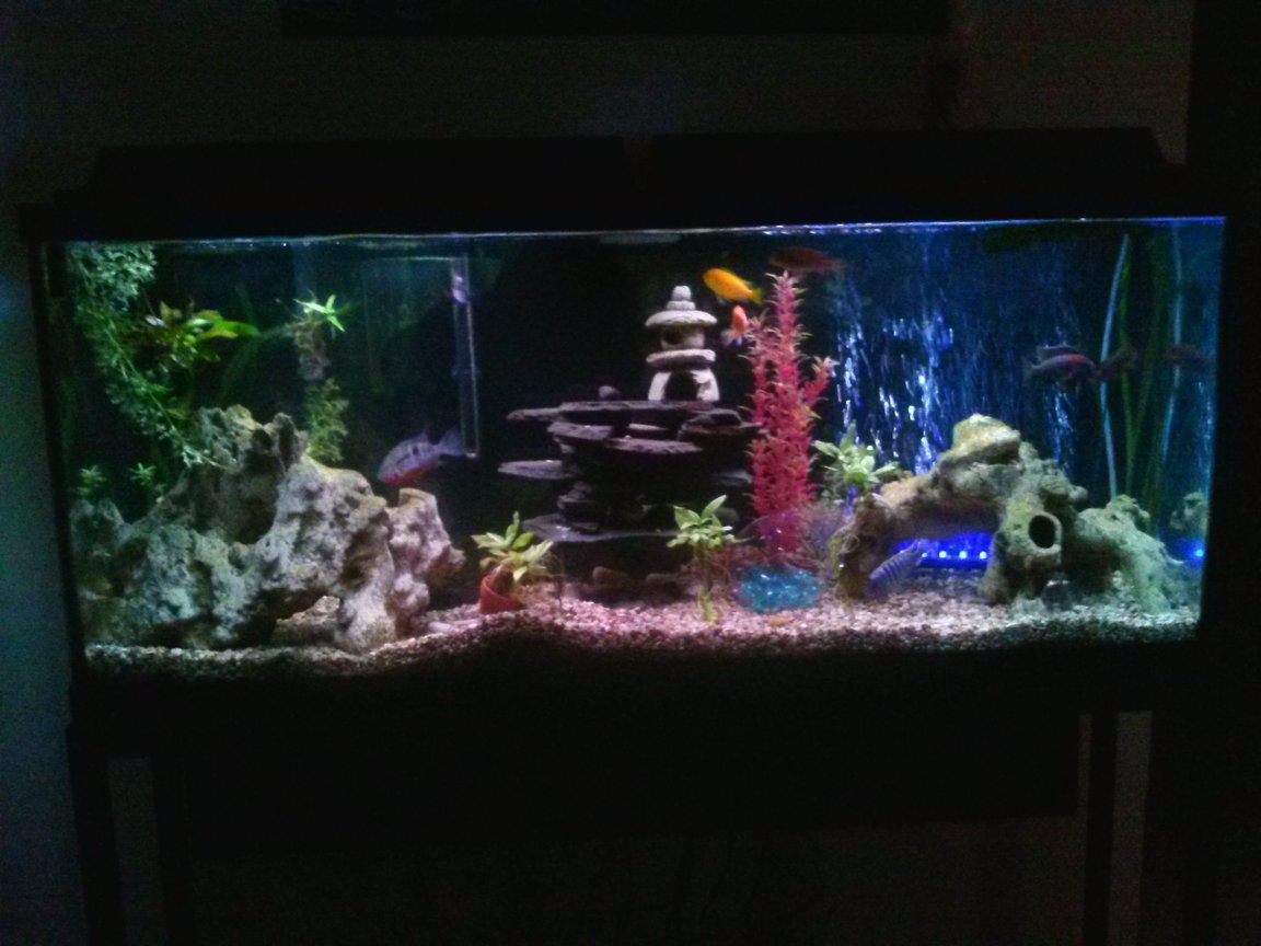 55 gallons planted tank (mostly live plants and fish) - a 55 gallon mixed cichlid and all live plants.(but1)!underwater LED ligjt with bubbler