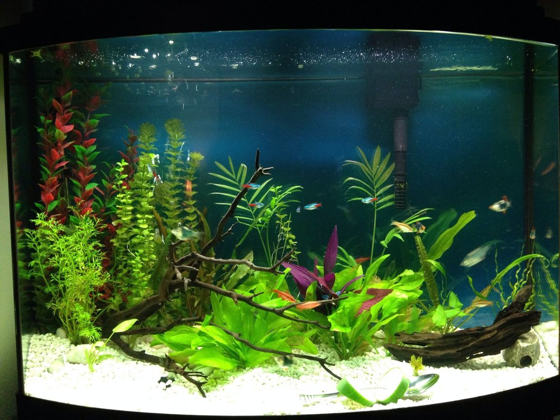 36 gallons planted tank (mostly live plants and fish) - Planted freshh