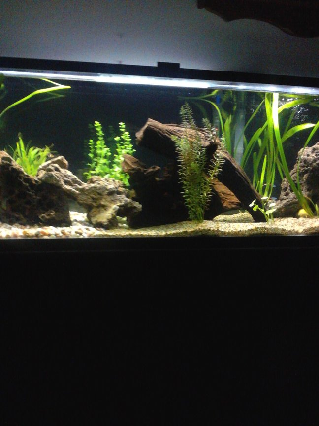 60 gallons planted tank (mostly live plants and fish) - Discus, cats, tetra, frogs and live plants.