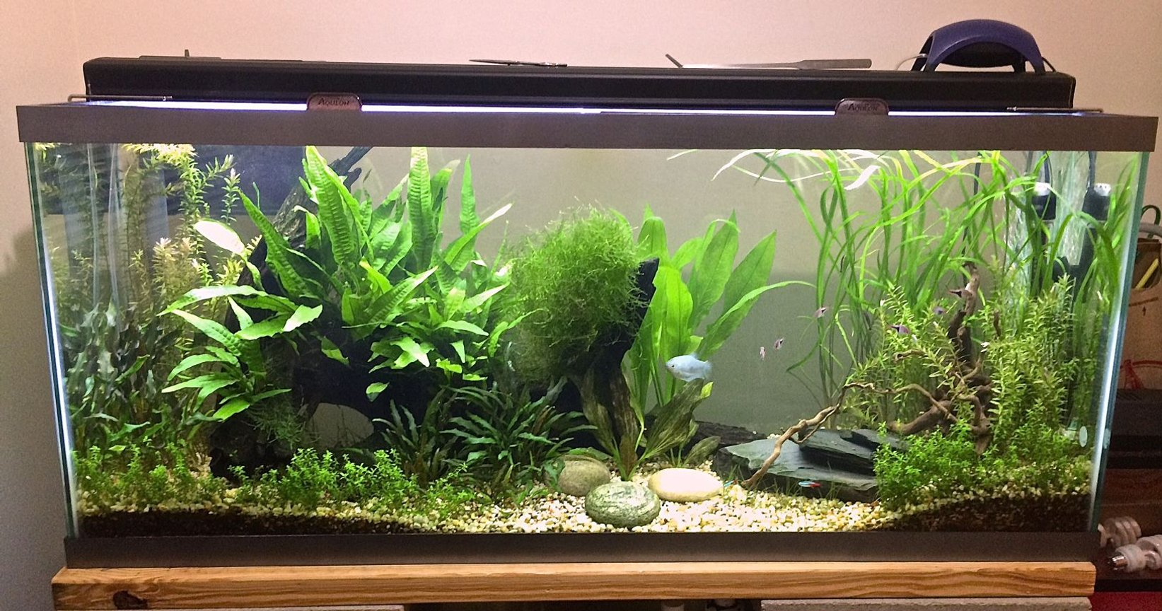 55 gallons planted tank (mostly live plants and fish) - 55 gal planted tank.