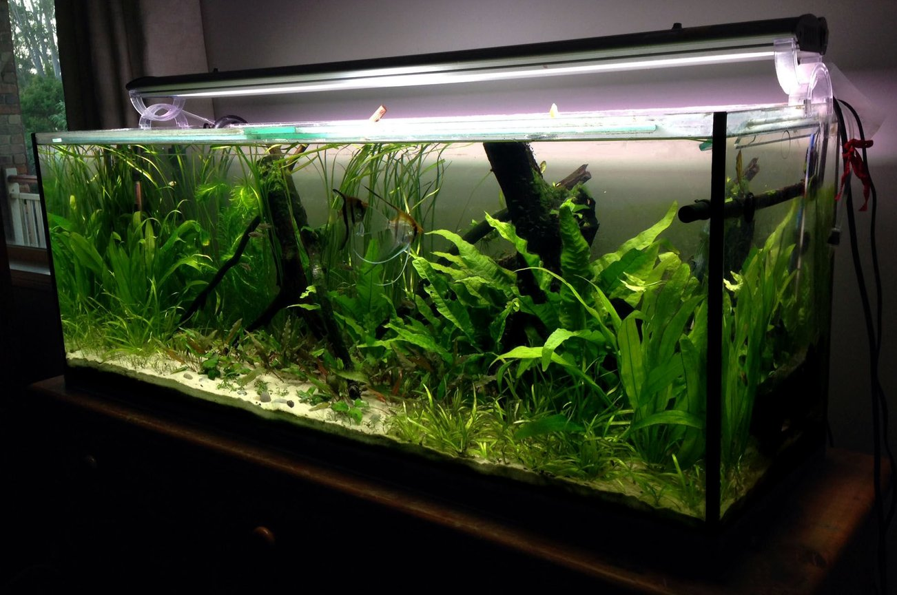 55 gallons planted tank (mostly live plants and fish) - Planted 4 foot