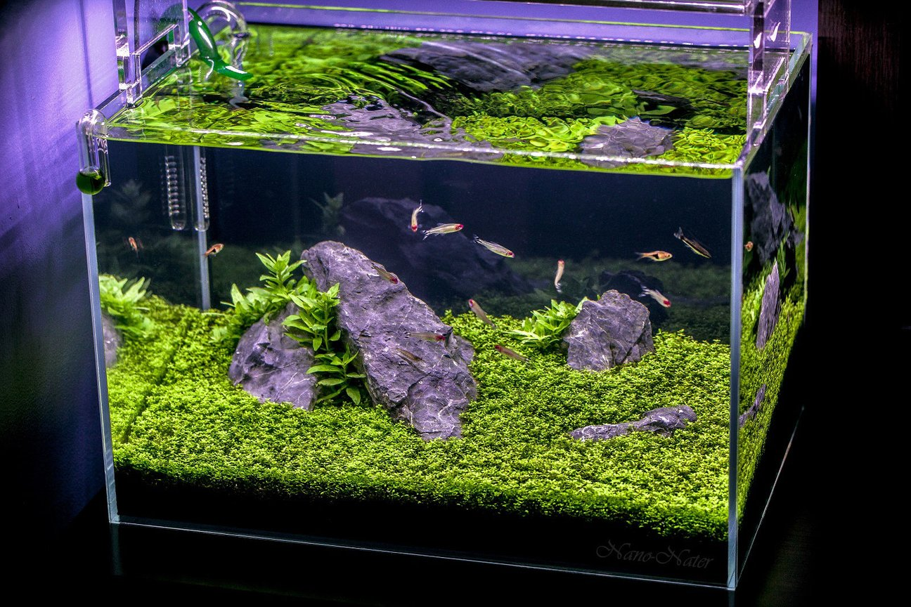 10 gallons planted tank (mostly live plants and fish) - 10 Gallons Started April 1rst 2015,Date of Shot: June 13th 2015. This shot shows the Aquarium as if you were viewing it in person. I used a B+W Polarized Filter to acheive this. ~Camera:Canon 5D MarkII, Lens:Canon 100mm f2.8L IS USM Macro