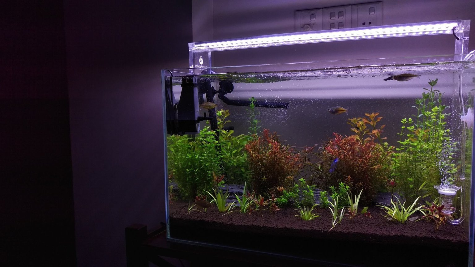 26 gallons planted tank (mostly live plants and fish) - A month old planted tank.