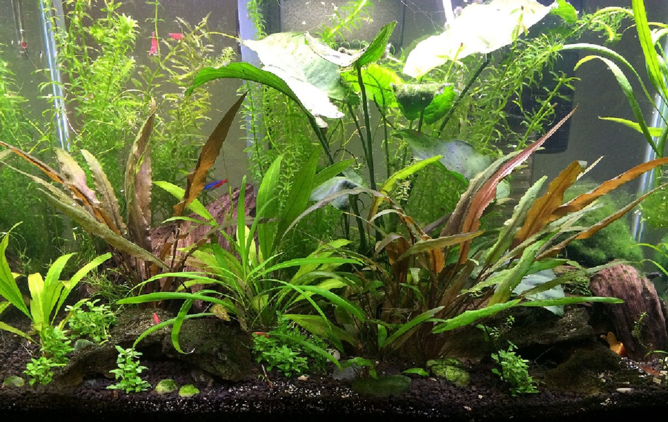 20 gallons planted tank (mostly live plants and fish) - Here's my 20 gal. If I was braver, I'd go bigger!