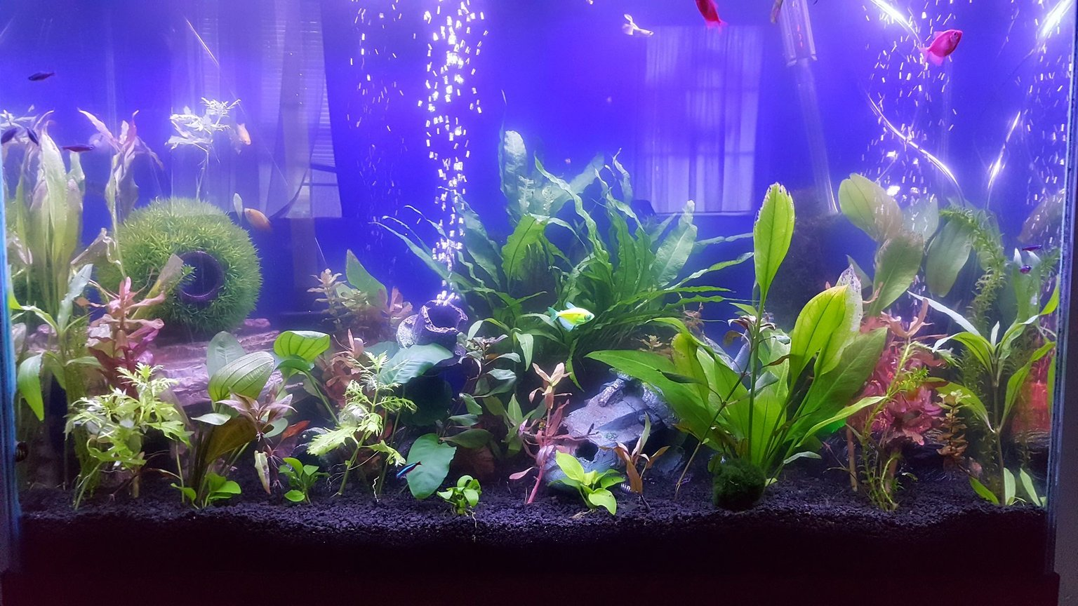 45 gallons planted tank (mostly live plants and fish) - Just a quick pic