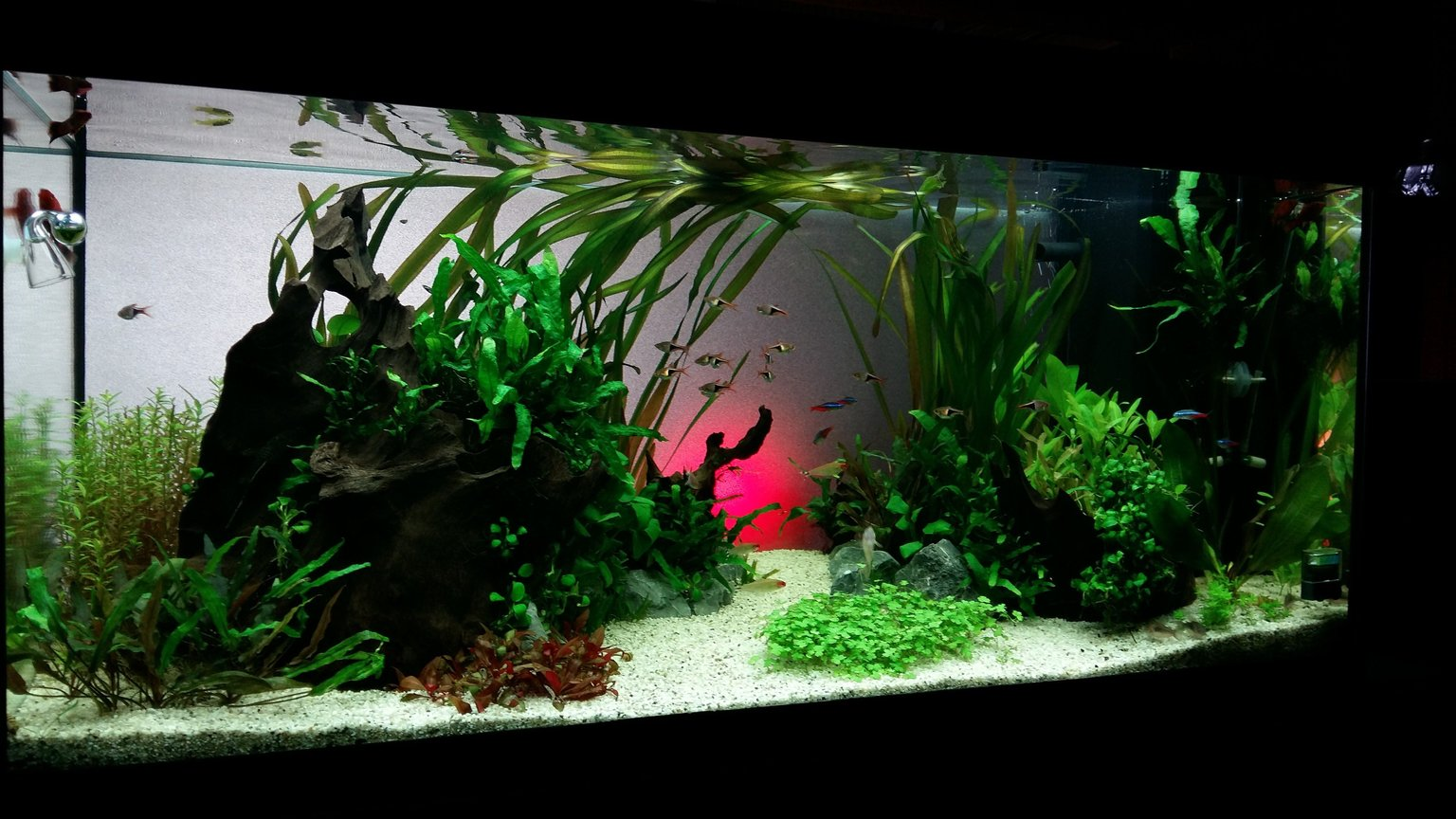 50 gallons planted tank (mostly live plants and fish) - MY zen