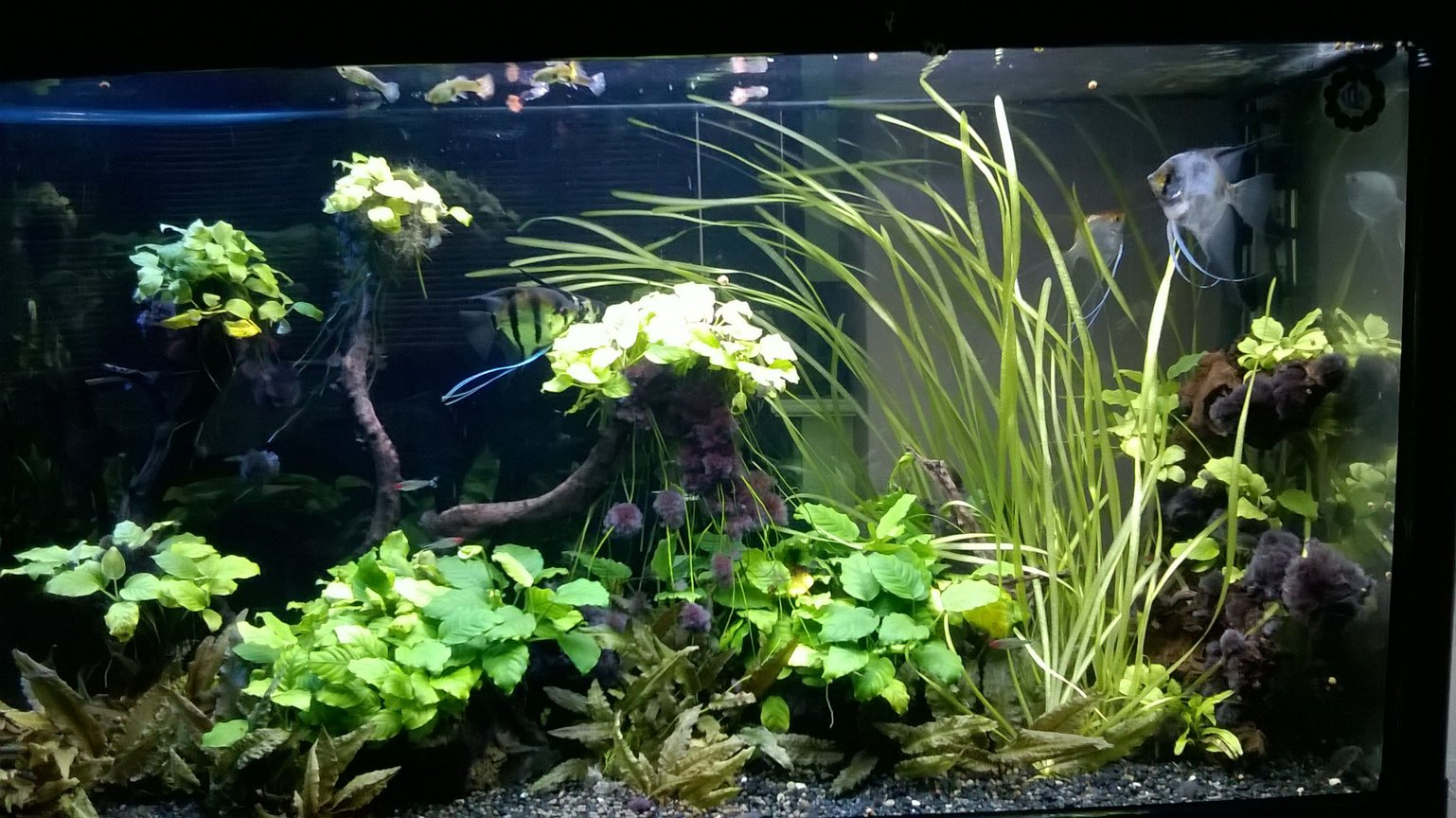 90 gallons planted tank (mostly live plants and fish) - Bullet shape 90gal tank.