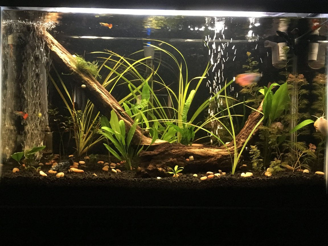 29 gallons planted tank (mostly live plants and fish) - My 29 gal planted tank