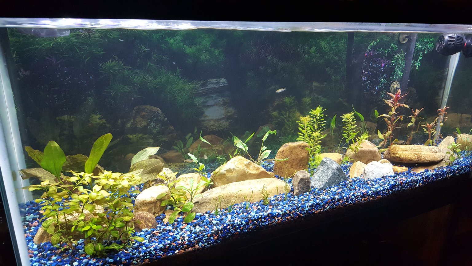 55 gallons planted tank (mostly live plants and fish) - 1st 4 weeks of restarting aquarium.