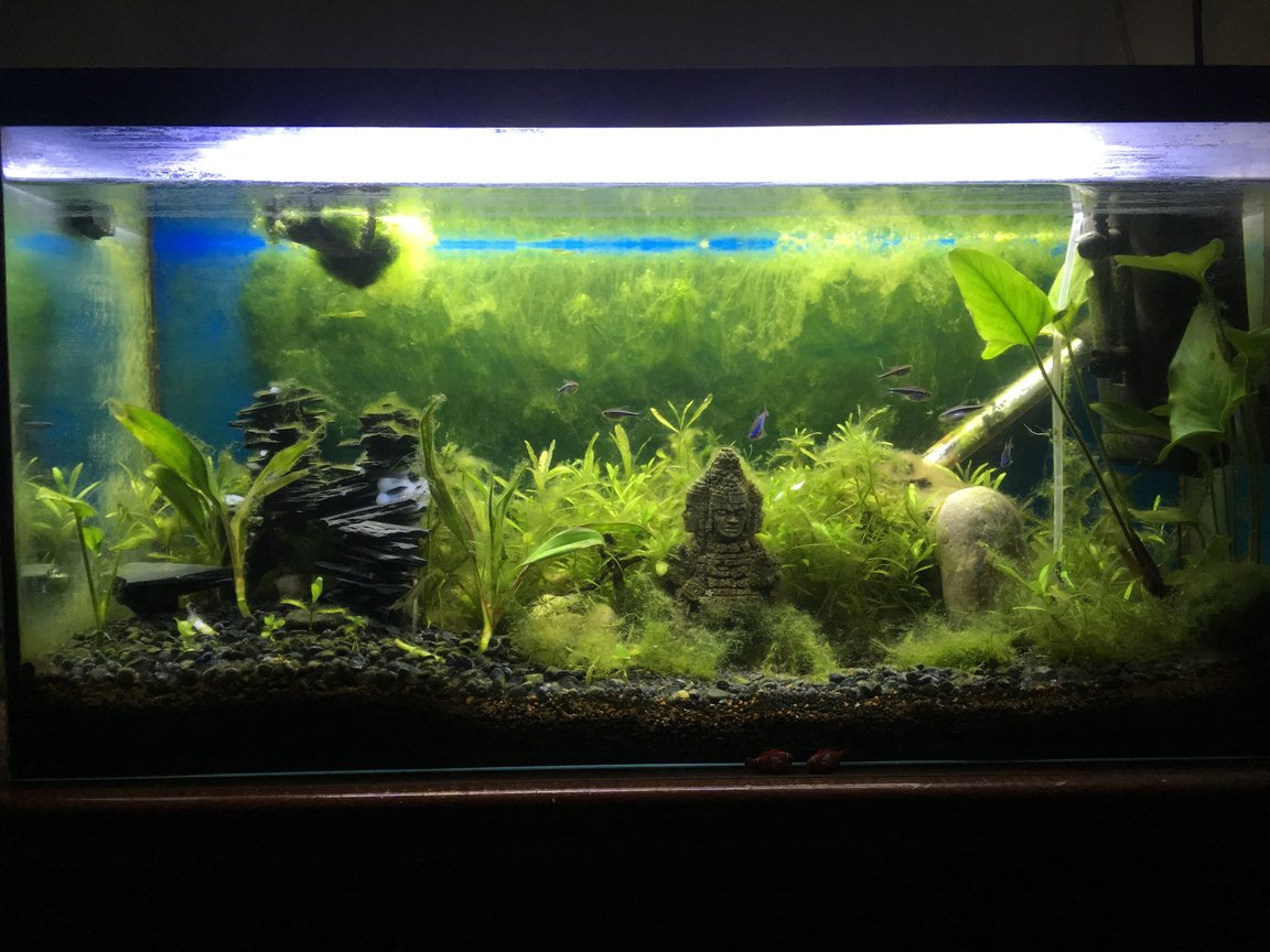 25 gallons planted tank (mostly live plants and fish) - Vid