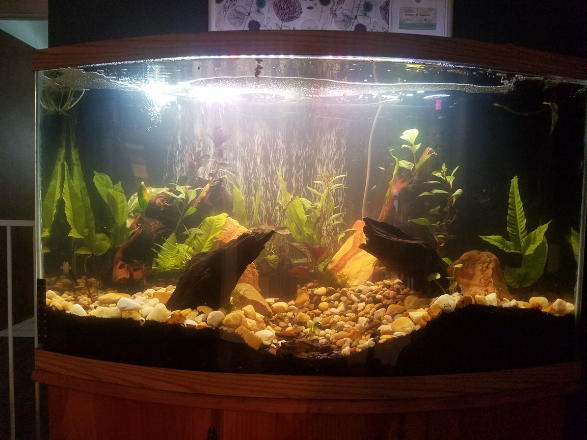 48 gallons planted tank (mostly live plants and fish) - Front