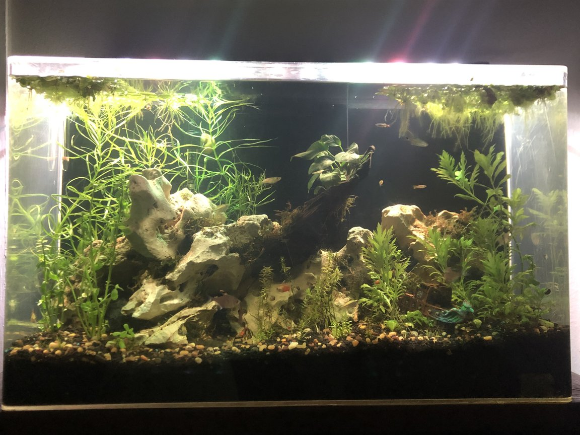 65 gallons planted tank (mostly live plants and fish) - Freshwater community