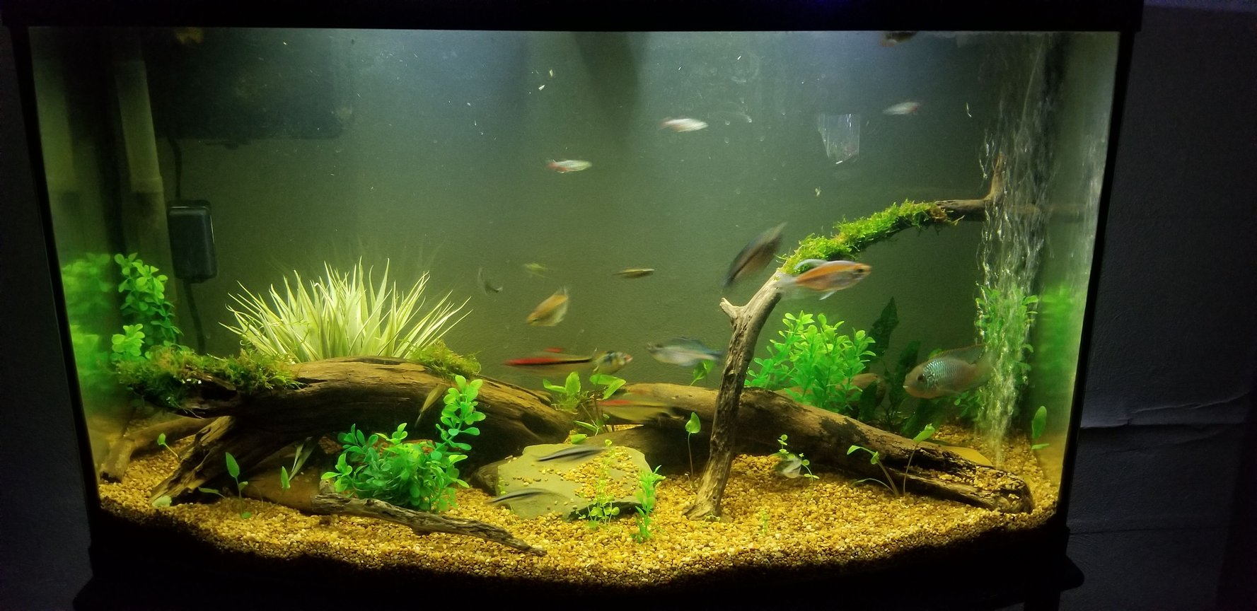 55 gallons planted tank (mostly live plants and fish) - 46 gallon bowfront community tank. Contains both live and artificial plants.