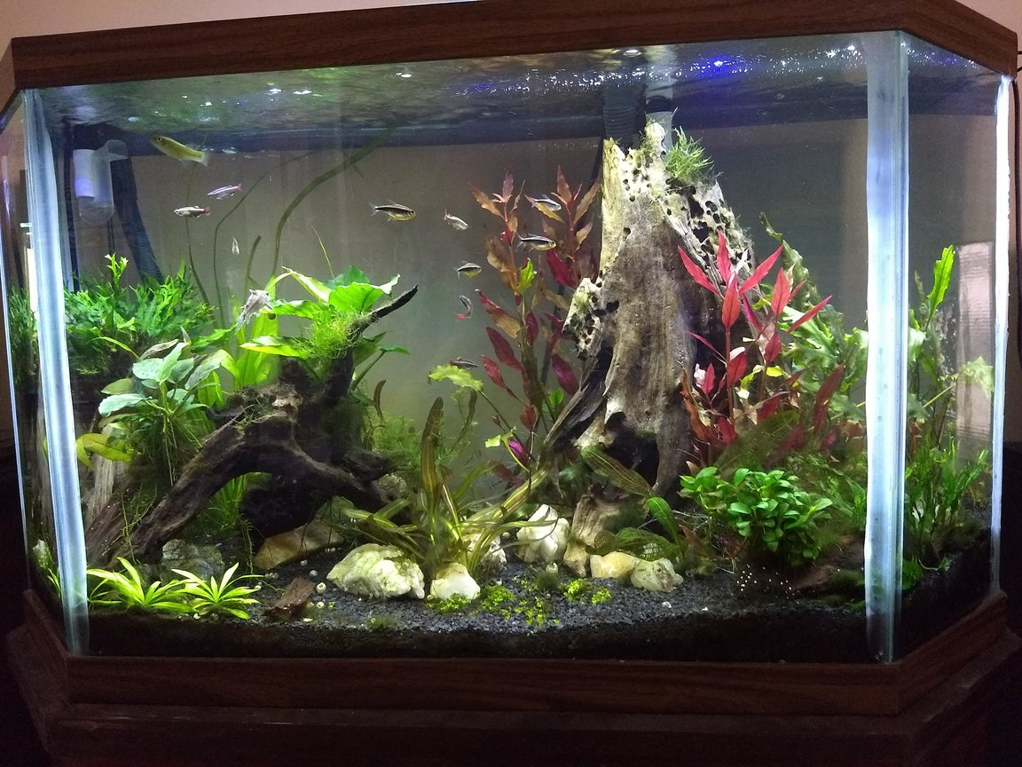 45 gallons planted tank (mostly live plants and fish) - 45 gal high tech. Needs work, looking for suggestions!! :)