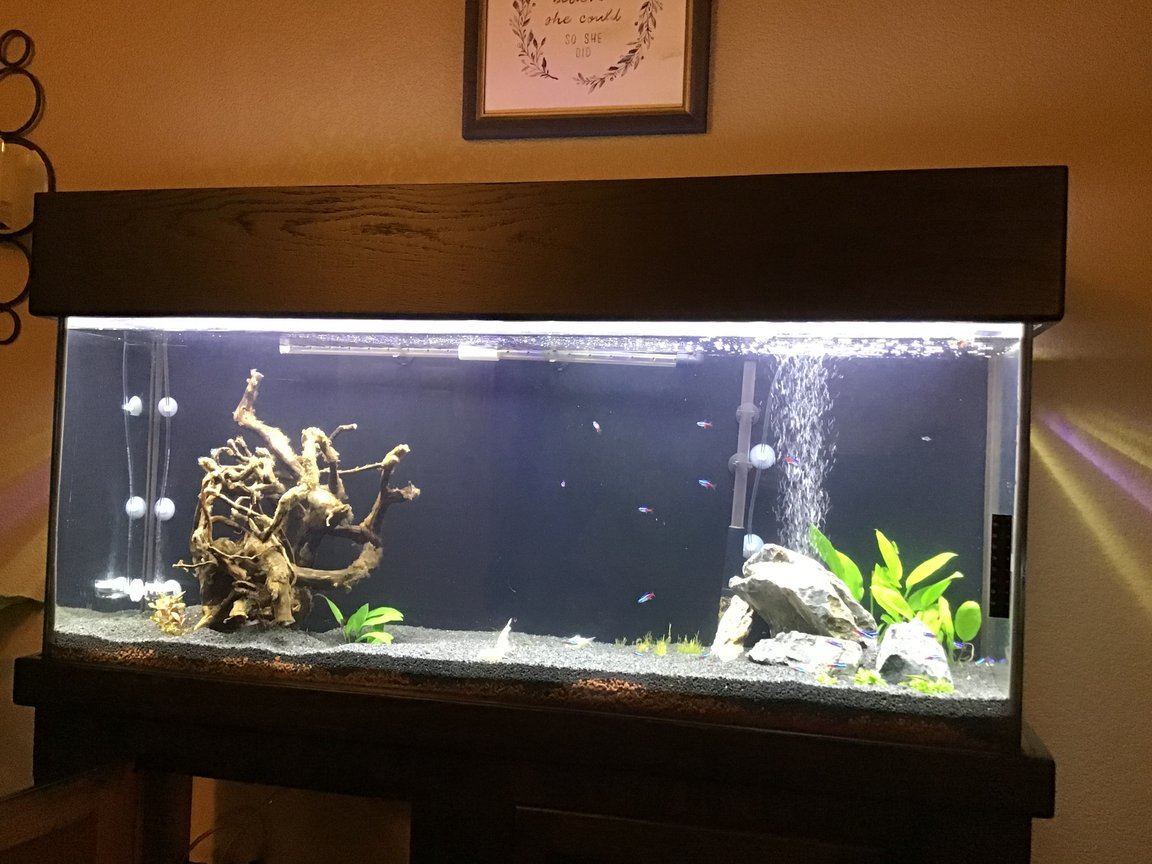 55 gallons planted tank (mostly live plants and fish) - Just getting started..