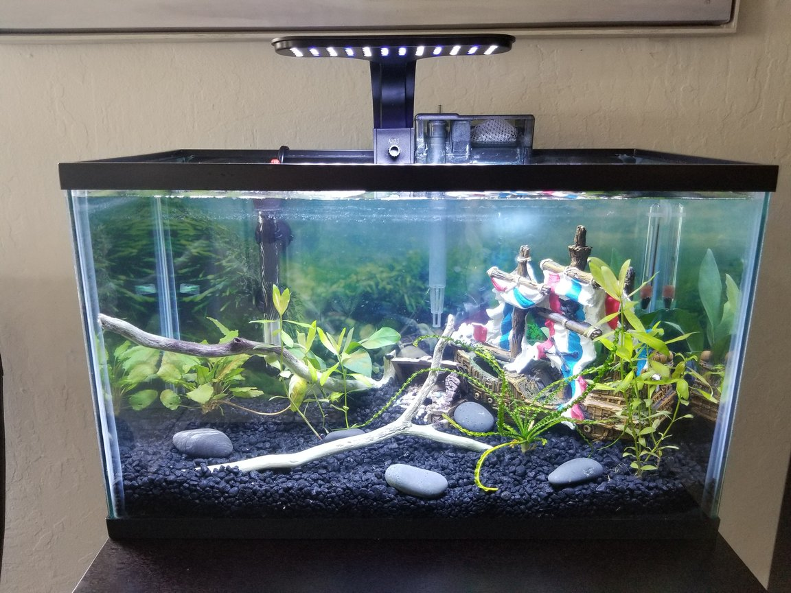 10 gallons planted tank (mostly live plants and fish) - 10 gallon planted tank