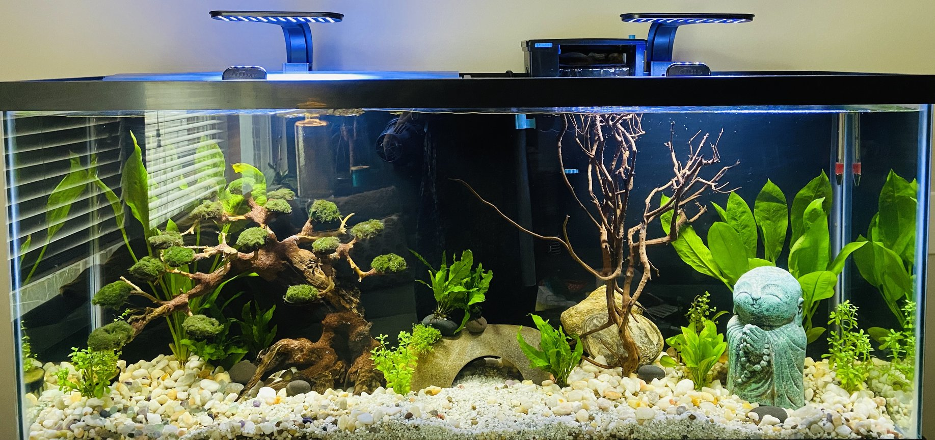 55 gallons planted tank (mostly live plants and fish) - Zen Garden